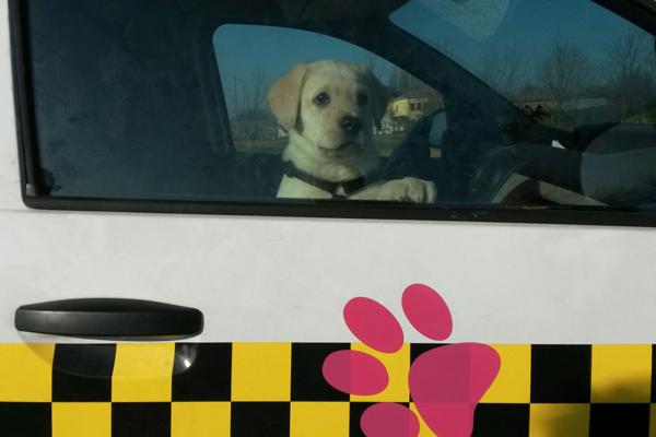 dog-taxi-1_servizi